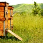 BeeHive Theft & Security How to Secure Your Hives in California