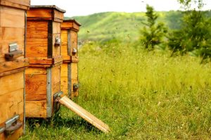 Bee Hive Theft & Security