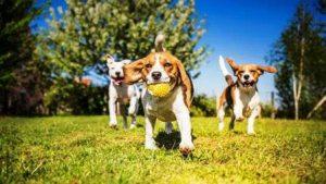 livermore dog park